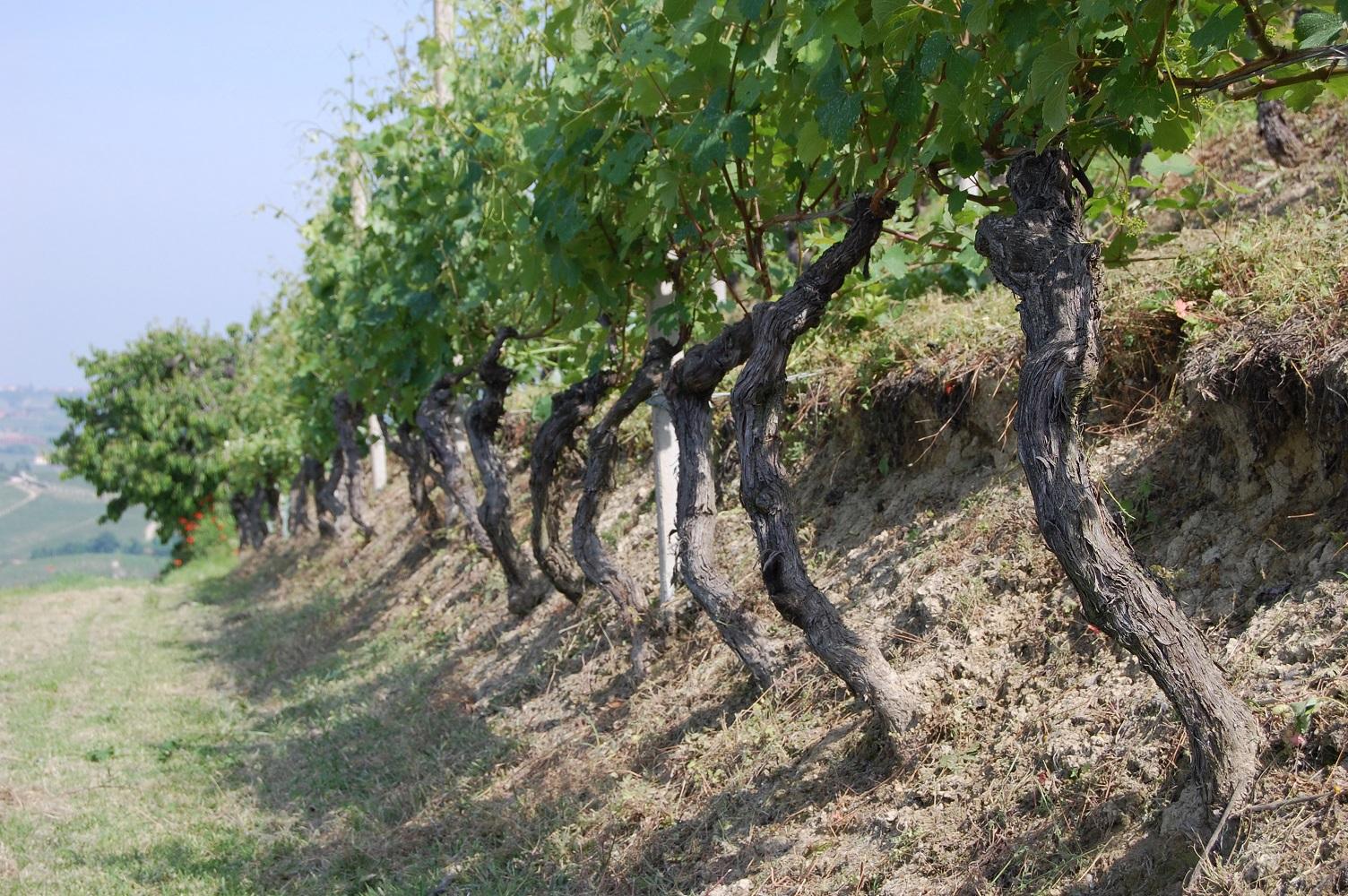 Besondere Weingenüsse & Co.